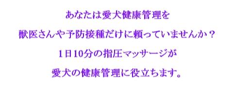わんこ2.jpg